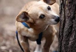 Pies przy pniu drzewa