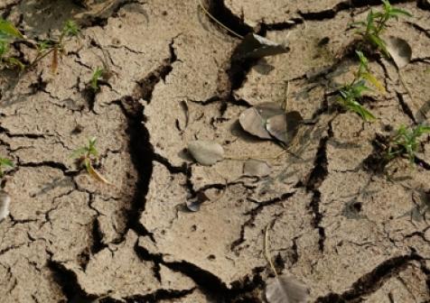 Spękana ziemia z powodu suszy